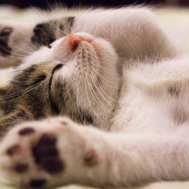 De positieve invloed van katten