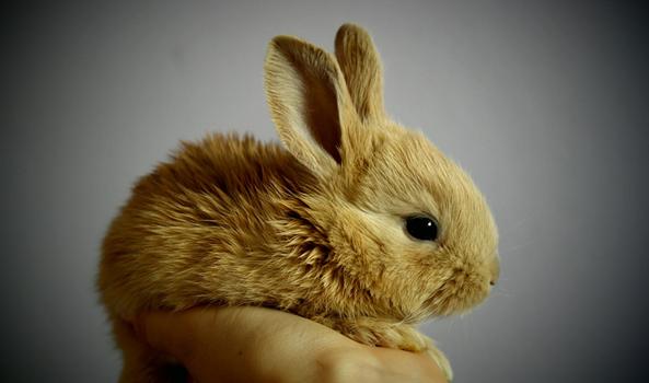Medpets.nl – Bestel alles voor de gezondheid van je dier nu voordelig bij dé online dierenapotheek.
